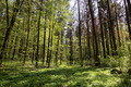 Green forest on a sunny day. - PhotoDune Item for Sale