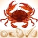 Red Crab and Few Seashells - GraphicRiver Item for Sale