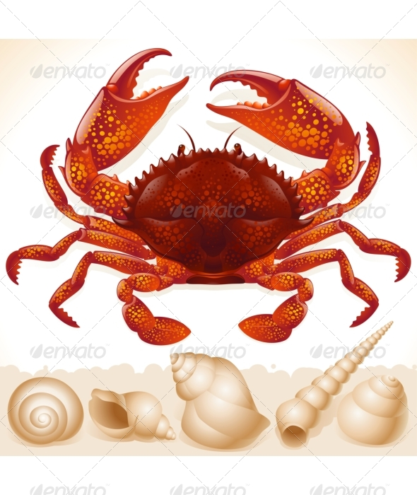 Red Crab and Few Seashells - Animals Characters