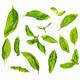 Scattered fresh sweet basil leaves - PhotoDune Item for Sale