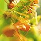 Ants on a Tree Branch 02 - VideoHive Item for Sale