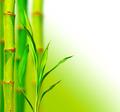 Beautiful bamboo background - PhotoDune Item for Sale