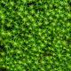 Moss texture background - PhotoDune Item for Sale