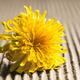 Dandelion on a wooden background. - PhotoDune Item for Sale