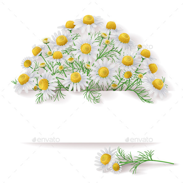 GraphicRiver Banner with Wild Chamomile Bunch 11249198