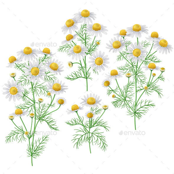 GraphicRiver Wild Chamomile Bunches Set 11249257