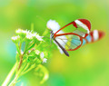Beautiful butterfly on flower - PhotoDune Item for Sale