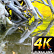 Dry Wood Dead Tree in Green Lake 2 - VideoHive Item for Sale