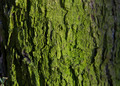 Mossy Tree Trunk - PhotoDune Item for Sale