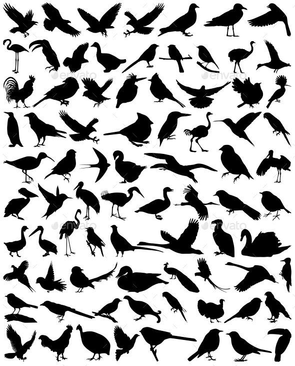 GraphicRiver Birds 11257136