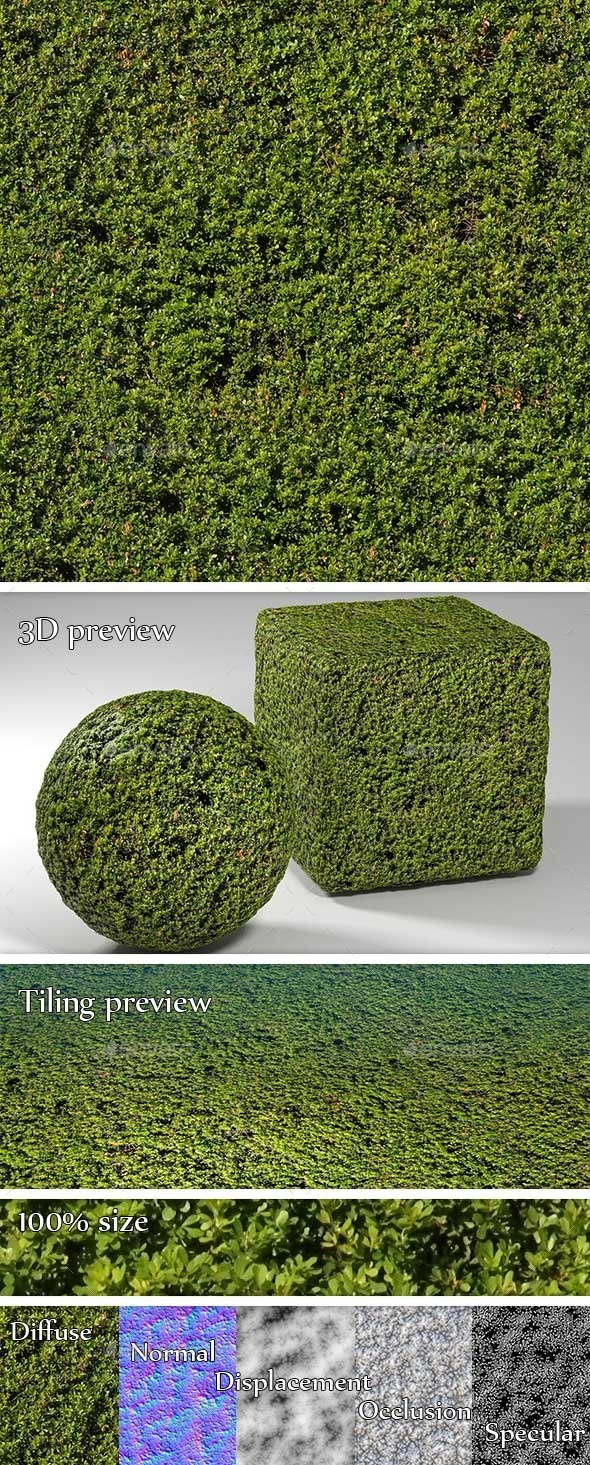 Fine Foliage Hedge Seamless Texture - 3DOcean Item for Sale