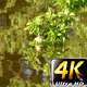 Leaves and Flowers on Green Lake 2 - VideoHive Item for Sale
