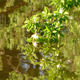 Leaves and Flowers on Green Lake - VideoHive Item for Sale