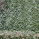 Green Wall - VideoHive Item for Sale