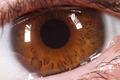human eye - PhotoDune Item for Sale