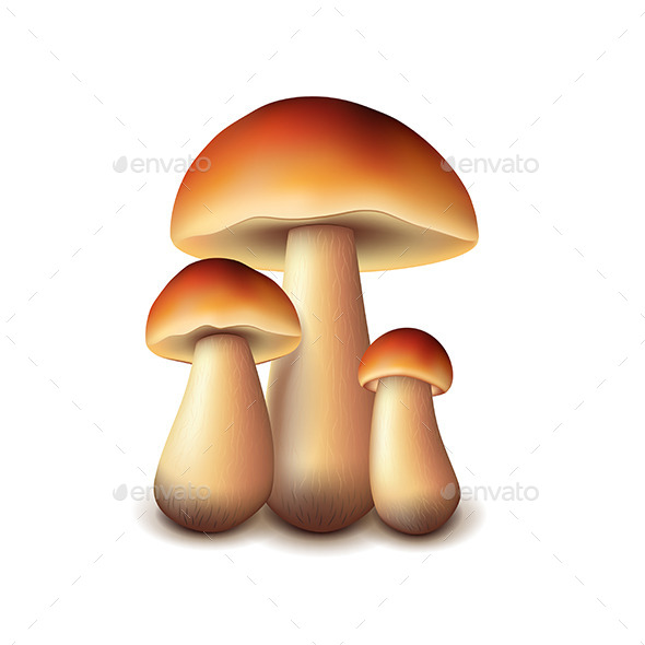 GraphicRiver Forest Mushrooms 11259099