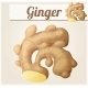 Ginger. Detailed Vector Icon.  - GraphicRiver Item for Sale