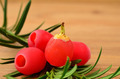 Yew berries close up - PhotoDune Item for Sale