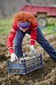 Woman sowing potatoes - PhotoDune Item for Sale