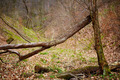 Fallen trees in a forest on springtime - PhotoDune Item for Sale