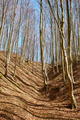 Landscape with beech forest on springtime - PhotoDune Item for Sale