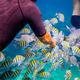 Tropical Coral Reef.Man feeds the tropical fish. - PhotoDune Item for Sale