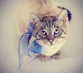 Striped cat with a blue tape looks up.  - PhotoDune Item for Sale