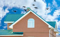flock of pigeons on the roof - PhotoDune Item for Sale