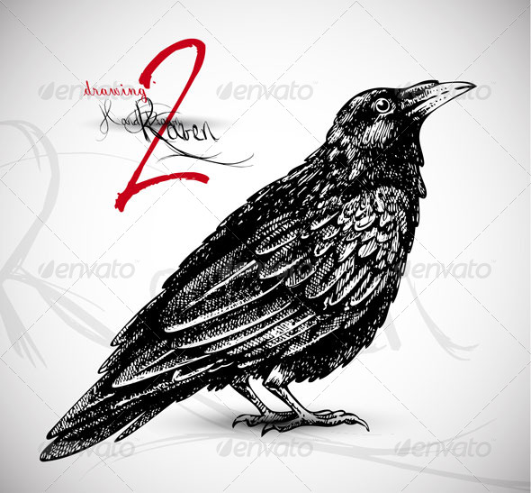 Raven Drawing - Animals Characters