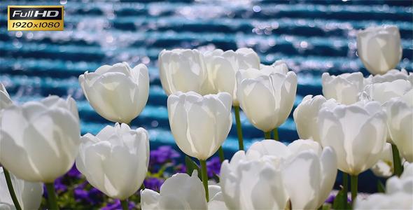 White Tulips And Waterfall