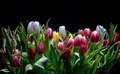 Bouquet of Bright Tulips Blooms - PhotoDune Item for Sale