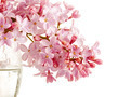 Lilac branch in a glass.  - PhotoDune Item for Sale