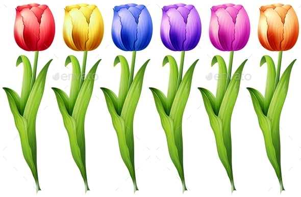 GraphicRiver Tulip 11270381