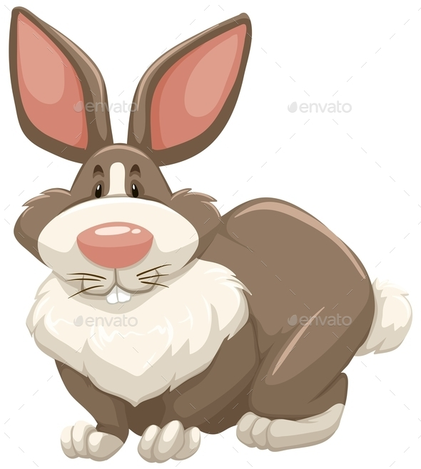 GraphicRiver Rabbit 11270714