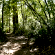 Walk Trough Forest - VideoHive Item for Sale