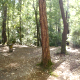 Sun in the Forest - VideoHive Item for Sale