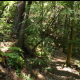 Hike in the Forest - VideoHive Item for Sale