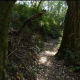 Green Redwood Forest - VideoHive Item for Sale