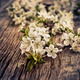 branch of the cherry blossoms closeup on wooden background  - PhotoDune Item for Sale