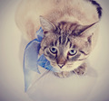 Striped cat with a tape.  - PhotoDune Item for Sale
