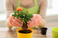 close up of woman hands planting roses in pot - PhotoDune Item for Sale