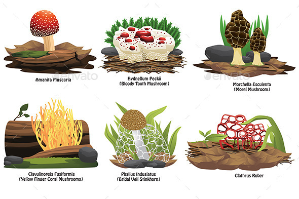 GraphicRiver Different Types of Mushroom 11273771
