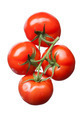 bunch of red tomatoes isolated on white - PhotoDune Item for Sale