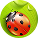 Green Leaf with Ladybugs and Water Drops - GraphicRiver Item for Sale