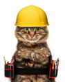 craftsman cat in white background - PhotoDune Item for Sale