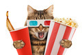 cat watching a movie - PhotoDune Item for Sale