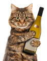 Cat with a bottle of wine - PhotoDune Item for Sale