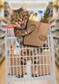 Funny cat in the store - PhotoDune Item for Sale