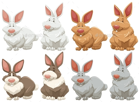GraphicRiver Rabbits 11281890