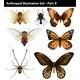 Arthropods - GraphicRiver Item for Sale